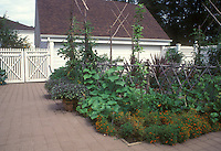 Pretty backyard vegetable and fruit garden, with house, stone block patio, fence gates, traditional style home, plants growing, container pots, blue sky and clouds