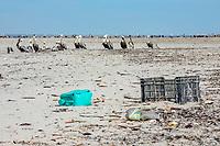 brown pelican, Pelecanus occidentalis, with plastic wastes on the beach at Isla de Patos, Magdalena Bay, Baja California, Mexico, Pacific Ocean