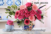 Marek, FLOWERS, BLUMEN, FLORES, photos+++++,PLMPMG1303,#f# roses