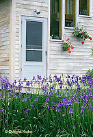 HB05-066x  English Cottage Garden -  bearded iris -  Iris spp.