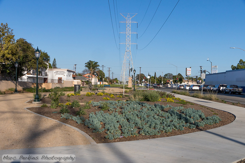 An overview of the native plant area of State Street Park.