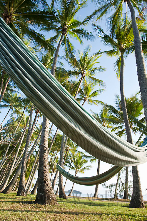 Hammocks amidst coconut palm trees.  Palm Cove, Cairns, Queensland, Australia