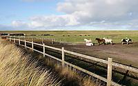 Nederland - Camperduin aan Zee - 2019 .  De kustlijn werd hier lange tijd gedomineerd door de Hondsbossche Zeewering; een 5,5 km lange verharde dijk die het land beschermde tegen de zee. In 2015 ging het gebied geheel op de schop. Het strand en de duinstrook zijn verbreed. Paarden achter de dijk.     Foto Berlinda van Dam / Hollandse Hoogte