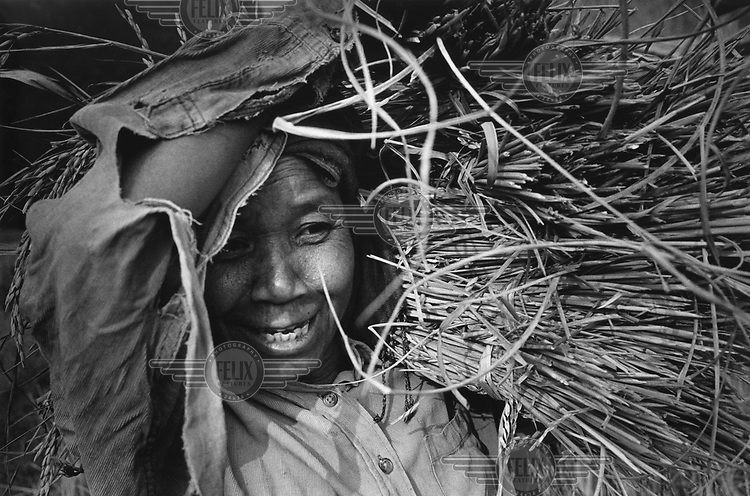 A woman harvests rice. Unexploded ordnance (UXO) is a constant danger to farmers in Laos. Each year an average of 300 people are killed or injured as a result of UXO. More than two million tonnes of ordnance was dropped over Laos ruring the Second Indo-China War, an estimated 30 per cent of which did not explode on impact. UXO still affects more than 25 per cent of Lao villages