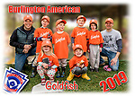 2019 Burlington American Goldfish