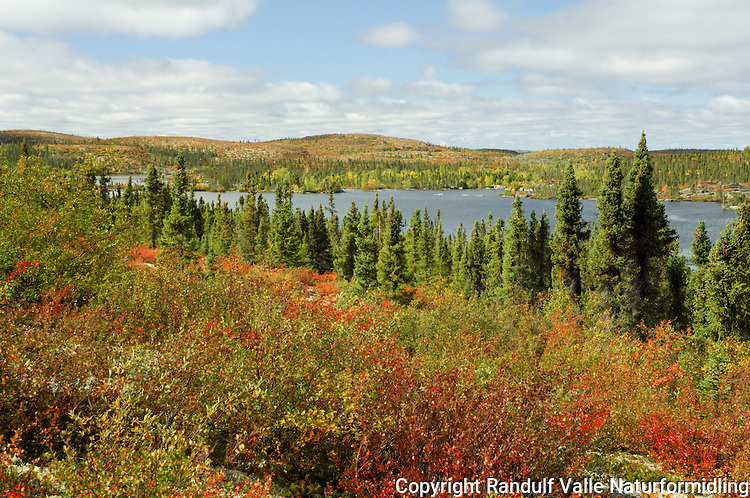 Høstdag ved Eileen River i Canada ---- Autumn by Eileen River, NWT, Canada