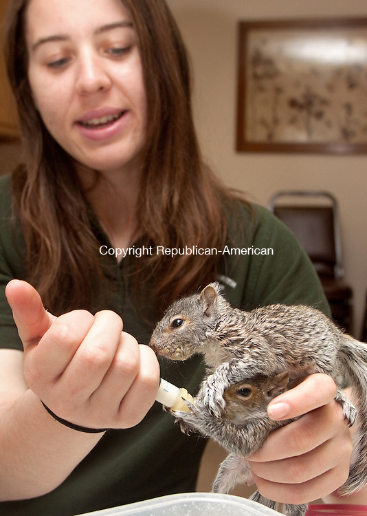 BERLIN CT- MAY 06 2015 050615DA04-  Theresa Nodine, wildife rehavilitator for New Britain Youth Museum at Hungerford Park in Kensington feeds 7 week old baby squirrels which needed rescueing and once they are at the proper health and age they will be released. The State DEEP Recently issued a press release warning people to leave them alone as they usualy don't need rescue. <br /> Darlene Douty Republican American