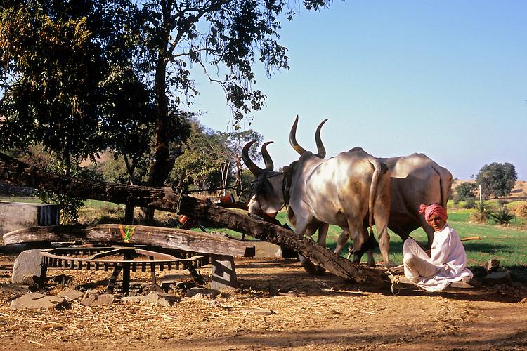 Aravalli Mountains, Rajasthan, India, 2011