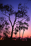 Silhouette of trees at sunset, Kakadu National Park, Northern Territory