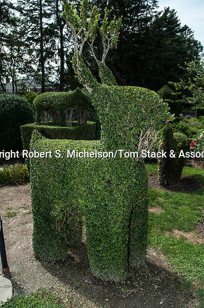 Reindeer Topiary at Green Animals Topiary in Portsmouth, Rhode Island.  This figure is made from California Privet.