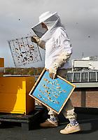 Nederland - Eindhoven - 2017 .  Let op : foto heeft klein formaat.   Imkers ( Asha Pogosova  en Alessandra Scalora ) aan het werk op het dak van het Ketelhuis op Strijp-S.  Foto Berlinda van Dam / Hollandse Hoogte