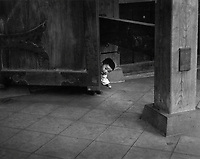 In Asakusa, Japan, the child of the caretaker is playing peek-a-boo with me.