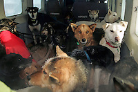 """Wednesday March 7, 2007   A """" Cessna Caravan"""" planeload of dropped dogs waits to leave the Nikolai checkpoint on Wednesday on their way back to Anchorage."""