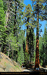 Entrance to Mariposa Grove of Giant Sequoias, Yosemite National Park