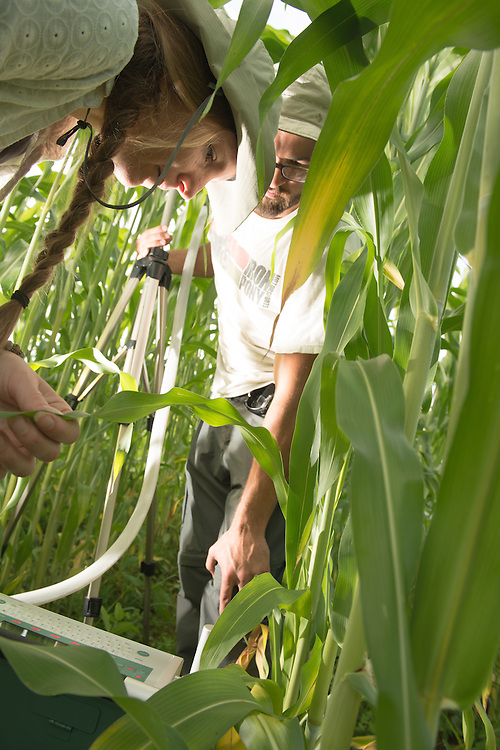 Graduate student Jonathan Grennell (Right) and Sarah Davis, Associate Professor at the Voinovich School of Leadership and Public Affairs  measure photosynthesis produced by sorghum at a research plot in the Ridges. Associate Professor Sarah Davis and her students are meauring the carbon footprints of a variety of species of plants for potential applications as a source of biofuel. Photo by Ben Siegel