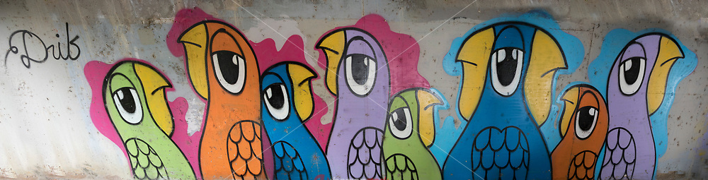 This is a parrot mural in an Austin storm drainage tunnel by Austin's most famous unknown graffiti artist Drib, who paints murals of parrots around town on public landmarks