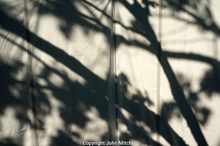 Black and white image of tree branch shadows on a white canvass background