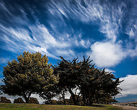 Clouds fill the sky over trees and a path at the San Leandro Marina Park.