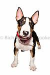 Partners Pets Portrait Shoot  4th August 2013