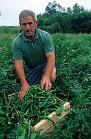 Europe/France/Aquitaine/64/Pyrénées-Atlantiques/Arbonne: Monsieur Charles Borda récolte les piments doux d'Anglet (AUTORISATION N°283)