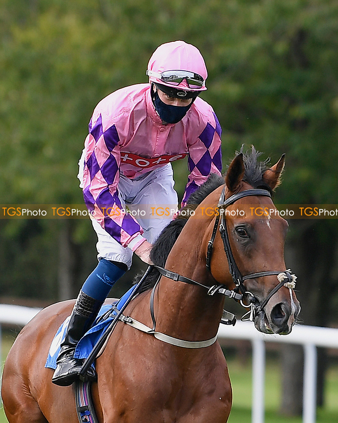 Suroor ridden by Daniel Muscutt goes down to the start of The Radcliffe & Co Novice Median Auction Stakes (Div 1) during Horse Racing at Salisbury Racecourse on 11th September 2020