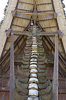 skulls of buffalos, front of traditional house called Tongkonan, Toraja land, Sulawesi, Indonesia. The buffalos are sacrfied on a funeral, following the deceased to the spiritual world. The skulls on front side of houses represent status.
