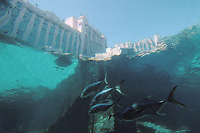 Iles Bahamas / New Providence et Paradise Island / Nassau: Hotel Atlantis à Paradise Island vu depuis les aquariums géants qui contiennet plusieurs millers de poissons [dont cent requins]