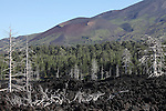 Dead trees embedded in 2002 A'a lava flows, with Monte Frumento delle Concazze cinder cone in background on the north flank of Mount Etna Volcano, Sicily, Italy.