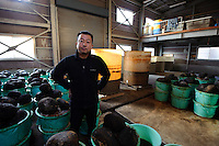 Shinichi Shinya, CEO of ishiri maker, Kaneishi, standing in his ishiri factory, Noto, Ishikawa prefecture, Japan, December 18, 2010.