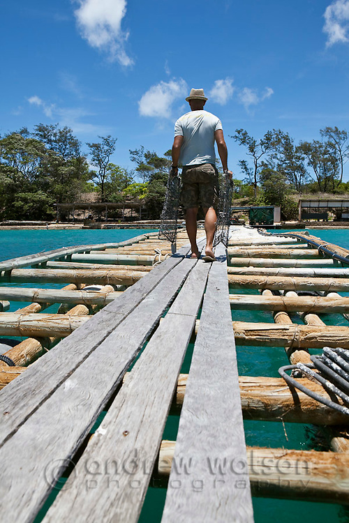 A worker carries pearl oyster cages along the jetty at Kazu Pearls.  Friday Island, Torres Strait Islands, Queensland, Australia