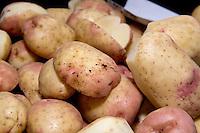 King Edward potatoes in a potato QC