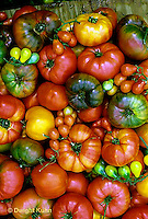 HS09-042x  Tomato - striped German, Prudens purple, Cherokee purple, Moskvich, red and yellow pear, brandywine, giant past varieties