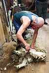 New Zealand, North Island, near Wellington, sheep shearing of wool at The Wool Shed in Wairarapa. Photo copyright Lee Foster. Photo # newzealand125700