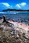 Driftwood on St Lucia beach.Caribbean