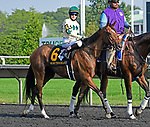 ARLINGTON HEIGHTS, IL - AUGUST 11 #6, Oh So Terrible,  before the G1 Beverly D S. at Arlington Park on August 11, 2018 in Arlington Heights, IL. (Photo by Jessica Morgan/Eclipse Sportswire/Getty Images)