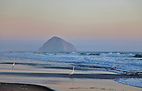 Morro Bay Sunset and white egrets in the surf