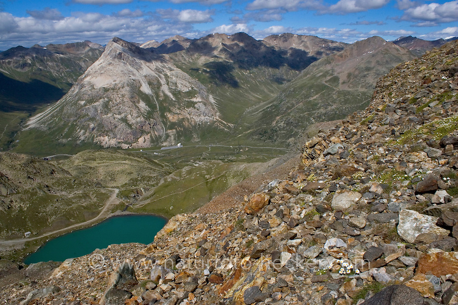 Berninagruppe, Bernina, Berggruppe, Berge, Alpen, Ostalpen, Engadin, Graubünden, Schweiz, Schotterflur, Schotterfläche. Bernina Range, mountain range, Alps, Switzerland