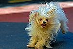Animais. Mamiferos. Cães. Cachorro. Foto de Pedro Stabile.