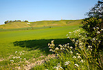 Scarp slope of White Horse on Cherhill Down and Lansdowne monument, Cherhill, Wiltshire, England