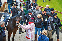 Jacky Green goes in for a hug while beautiful Grovine de Reve peers straight into my lens!!!: NZL-Dan Jocelyn rides Grovine de Reve during the Second Day of Dressage. Interim-28th. 2017 NED-Military Boekelo CCIO3* FEI Nation Cup Eventing. Friday 6 October. Copyright Photo: Libby Law Photography