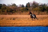 Wild Stallion Running  #W21