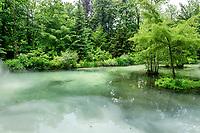France, Indre-et-Loire (37), Amboise, Jardin et Château du Clos Lucé, jardin autour du basin alimenté par la rivière L'Amasse ou Lamasse