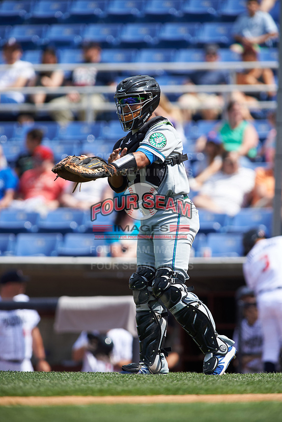 Hartford Yard Goats catcher Jan Vazquez (6) goes through the signs during a game against the Binghamton Rumble Ponies on July 9, 2017 at NYSEG Stadium in Binghamton, New York.  Hartford defeated Binghamton 7-3.  (Mike Janes/Four Seam Images)