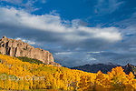 Aspen, Populus Tremula, Cimarron Ridge, Uncompahgre National Forest, Colorado