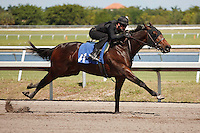#41Fasig-Tipton Florida Sale,Under Tack Show. Palm Meadows Florida 03-23-2012 Arron Haggart/Eclipse Sportswire.
