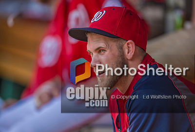 8 June 2013: Washington Nationals outfielder Bryce Harper (currently on the DL) watches play from the dugout during a game against the Minnesota Twins at Nationals Park in Washington, DC. The Twins edged out the Nationals 4-3 in 11 innings. Mandatory Credit: Ed Wolfstein Photo *** RAW (NEF) Image File Available ***