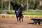 OCT 28: Zenyatta's daughter Zellda gallops at Santa Anita Park in Arcadia, California on Oct 28, 2019. Evers/Eclipse Sportswire/Breeders' Cup