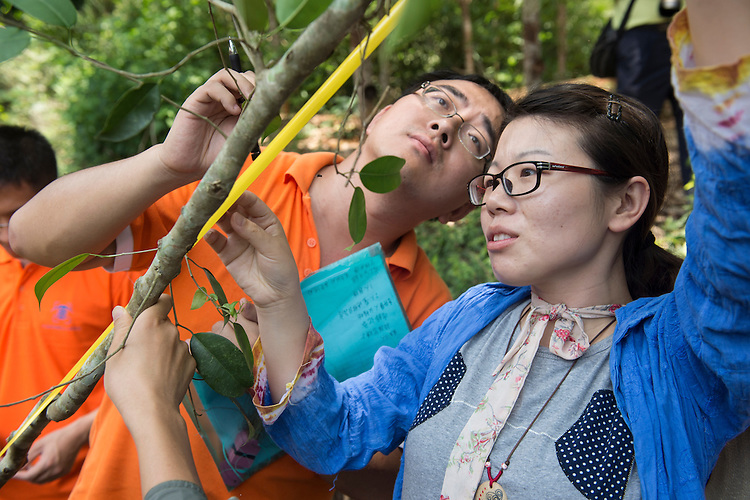 Staff from XTBG helping members of the Dai ethnic minority replant an area of forest on a hill that is considered as a holy site at Mangyangguan, Xishuangbanna, China. This project is supported by the BGCI and has been studied by XTBG for over 30 years. The site is considered to be holy as approximatley 370 years ago a highly respected doctor was reputed to have died against the only large stone in the forest. It has since become a place of prayer for the local buddhist population.