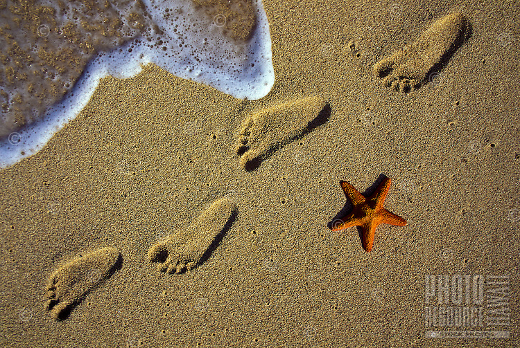 Footprints and starfish in the sand with small wave lapping up on shore