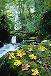 McCord Creek cascades through mossy rocks in the Columbia River Gorge, Oregon.